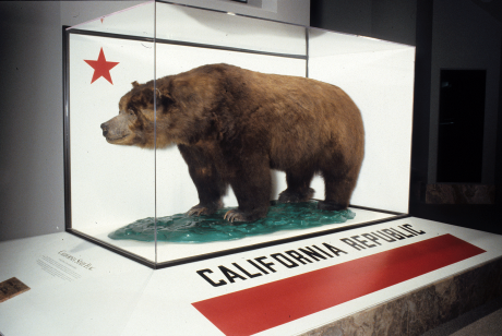 Monarch the California grizzly bear, courtesy of California Academy of Sciences.