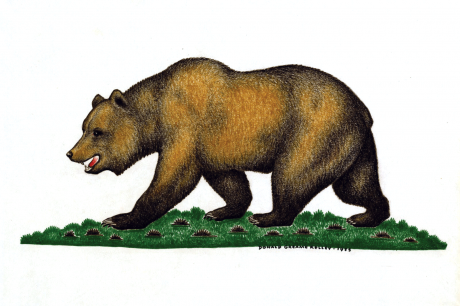 1953 original illustration for California state flag by Donald Graeme Kelley. Courtesy of California State Archives.