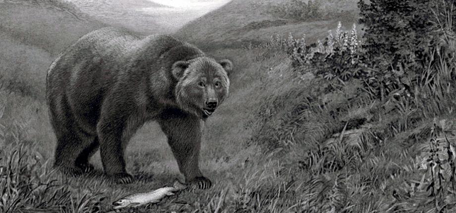 Image of Bear In Mind