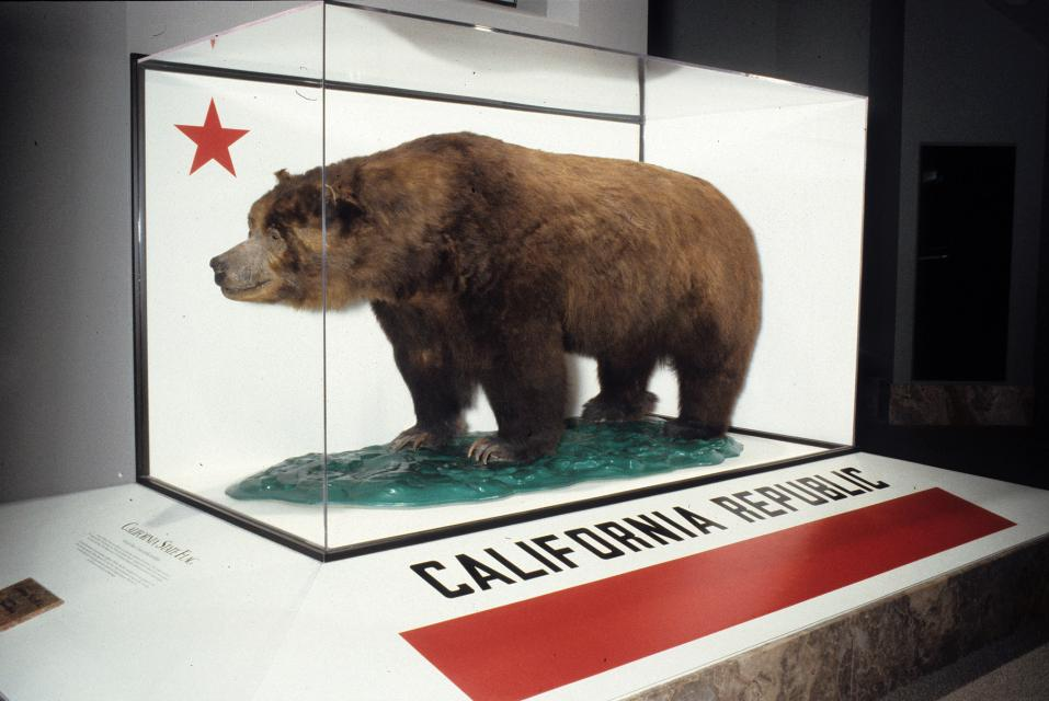 Display of Monarch, a stuffed grizzly Courtesy: CA Academy of Sciences