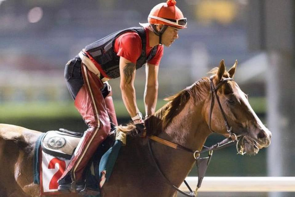 With exercise rider Willie Delgado aboard, California Chrome gets a predawn gallop at Meydan Racecourse in Dubai, United Arab Emirates, on Monday. The California star is a heavy favorite to win the world's richest horse race Saturday. NEVILLE HOPWOOD DUBAI RACING CLUB