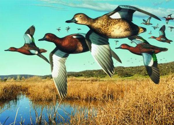 Image of Duck, Duck, Goose! The Art of Duck Stamps