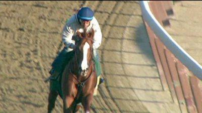 Image of 'California Chrome' Exhibit Coming to Sacramento