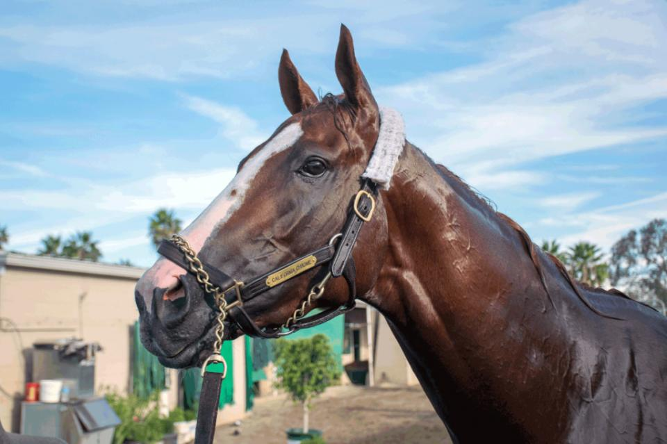 California's champion racehorse, California Chrome, is celebrated in a special exhibit at The California Museum. His trophies and other memorabilia are on display through Sept. 25. Photo courtesy Forestbird Photography/Kathleen Waldvogel Palma